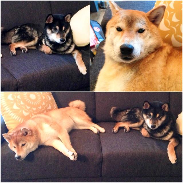tony + rachel have 2 fur babies too {yoshi + saki}. aren't they so cute?!